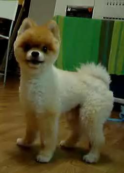 theremin dog