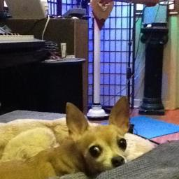 Studio guard dog at Thomas Grillo Studios